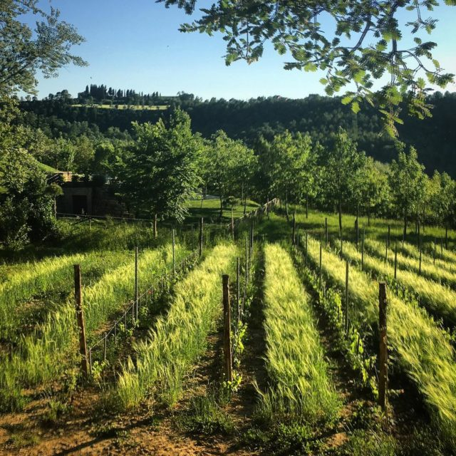 Our sweet little newbie vinobianco grechettoditodi vinobio organicwine lasegreta lasegretaumbriahellip
